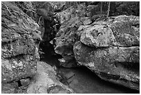 Avalanche Creek in autumn. Glacier National Park ( black and white)