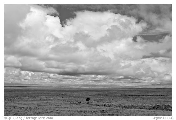 Solitary tree on prairie below cloud. Great Sand Dunes National Park and Preserve (black and white)
