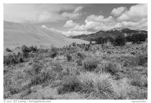 Desert shrubs, dunes and mountains. Great Sand Dunes National Park (black and white)