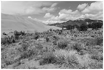 Desert shrubs, dunes and mountains. Great Sand Dunes National Park, Colorado, USA. (black and white)