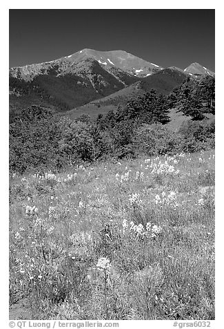 Meadow and Sangre de Cristo Mountains near Medora Pass. Great Sand Dunes National Park and Preserve (black and white)