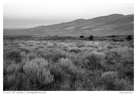 Grasslands with rubber rabbitbrush, sagebrush, and dunefield at dawn. Great Sand Dunes National Park and Preserve (black and white)