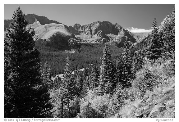 Subalpine forest, Sangre de Cristo mountains. Great Sand Dunes National Park and Preserve (black and white)