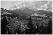 Mount Herard and autumn foliage at sunrise from Medano Pass. Great Sand Dunes National Park and Preserve ( black and white)
