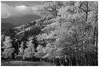 Autumn foliage and mountains near Medano Pass. Great Sand Dunes National Park and Preserve ( black and white)