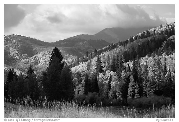 Hills covered with trees in autumn foliage near Medano Pass. Great Sand Dunes National Park and Preserve (black and white)