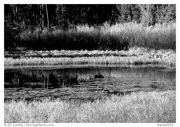 Pond with fall colors. Grand Teton National Park (black and white)
