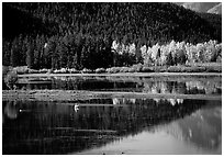 Fall foliage and reflections of Mt Moran in Oxbow bend. Grand Teton National Park ( black and white)