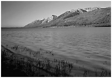 Reeds, Jackson Lake, and distant Teton Range, early morning. Grand Teton National Park ( black and white)