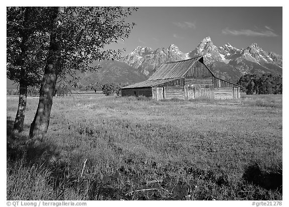 Trees, pasture and Old Barn on Mormon row, morning. Grand Teton National Park (black and white)