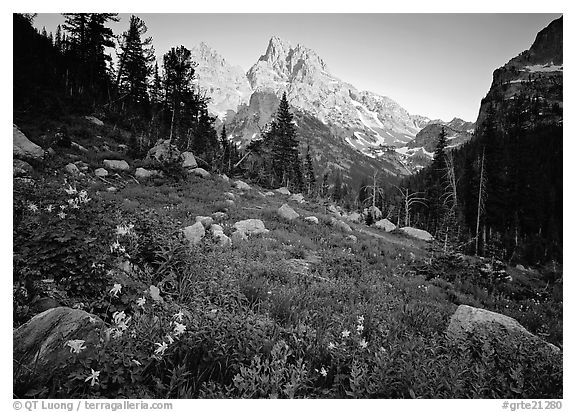 Columbine and Grand Teton at sunset. Grand Teton National Park (black and white)