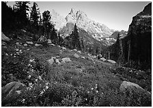 Columbine and Grand Teton at sunset. Grand Teton National Park ( black and white)