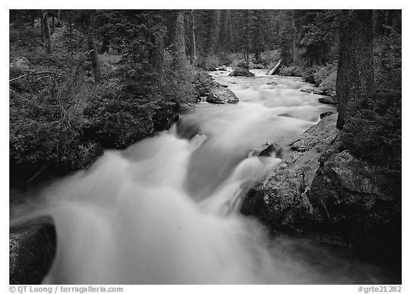 Cascade Creek and dark forest. Grand Teton National Park (black and white)