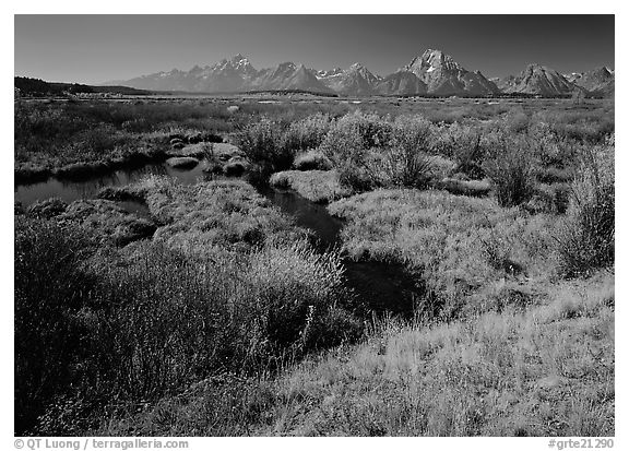 Wetlands and Teton range in autumn. Grand Teton National Park (black and white)