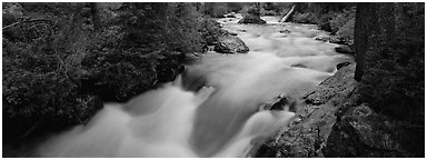 Creek flowing in forest. Grand Teton National Park (Panoramic black and white)