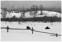 Fence and moose in winter. Grand Teton National Park, Wyoming, USA. (black and white)