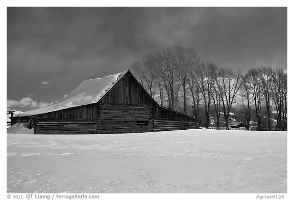 Wooden barn and cottonwoods in winter. Grand Teton National Park (black and white)