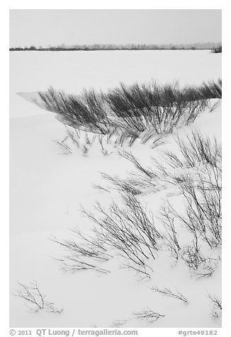 Winter landscape with shrubs and frozen Jackson Lake. Grand Teton National Park (black and white)