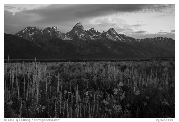 Wildflowers and Tetons at sunrise, Antelope Flats. Grand Teton National Park (black and white)