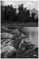 Beaver Dam near Schwabacher Landing. Grand Teton National Park ( black and white)