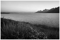 Wildflowers and Teton range from Jackson Lake, dusk. Grand Teton National Park ( black and white)