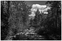 Lake Creek, Laurence S. Rockefeller Preserve. Grand Teton National Park ( black and white)
