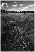 Sagebrush meadow, Laurence S. Rockefeller Preserve. Grand Teton National Park ( black and white)