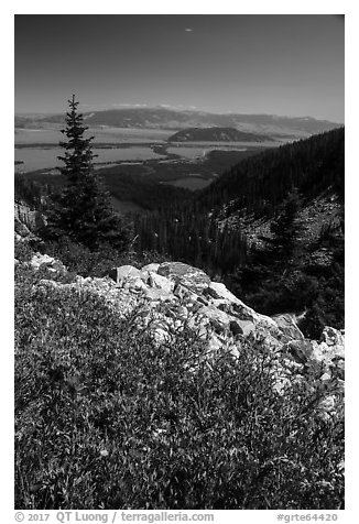Wildflowers, view over Jackson Hole from Garnet Canyon. Grand Teton National Park (black and white)