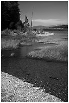 Island shoreline with grasses and clear water, Colter Bay. Grand Teton National Park ( black and white)