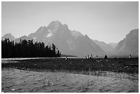 Geese and Mt Moran, Colter Bay. Grand Teton National Park ( black and white)