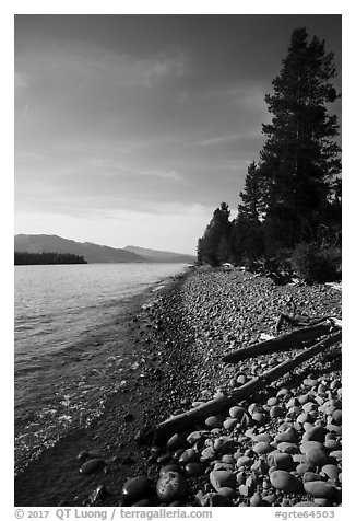 Driftwood on beach, Colter Bay. Grand Teton National Park (black and white)