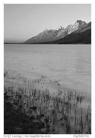 Teton range and Jackson Lake seen from Lizard Creek, sunrise. Grand Teton National Park (black and white)