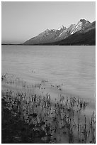 Teton range and Jackson Lake seen from Lizard Creek, sunrise. Grand Teton National Park ( black and white)