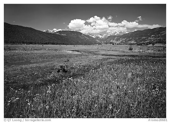 Summer flowers and stream in Many Parks area. Rocky Mountain National Park (black and white)