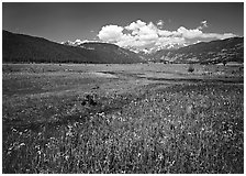 Summer flowers and stream in Many Parks area. Rocky Mountain National Park, Colorado, USA. (black and white)