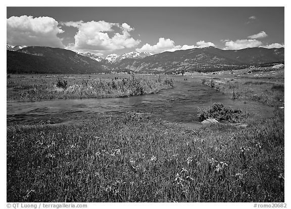 Wildflowers, meadow, and stream, Many Parks. Rocky Mountain National Park (black and white)