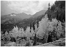 Aspens in fall foliage and Glacier basin mountains. Rocky Mountain National Park, Colorado, USA. (black and white)