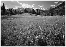 Wildflower carpet in meadow and mountain range. Rocky Mountain National Park, Colorado, USA. (black and white)