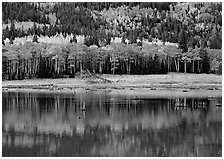 Mixed trees and  reflections. Rocky Mountain National Park ( black and white)