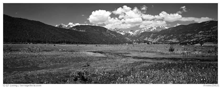 Summer wildflowers and stream in mountain meadow. Rocky Mountain National Park (black and white)