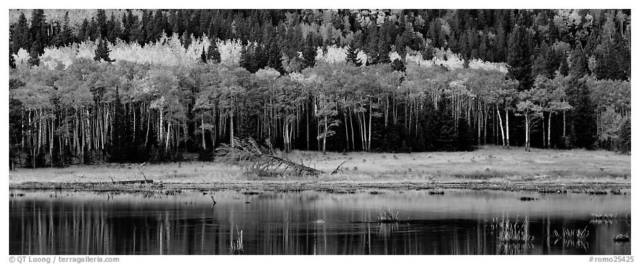 Aspens in autum foliage reflected in pond. Rocky Mountain National Park (black and white)