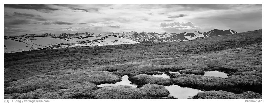 Alpine meadow in autumn. Rocky Mountain National Park (black and white)