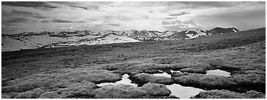 Alpine meadow in autumn. Rocky Mountain National Park (Panoramic black and white)