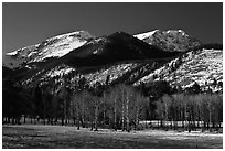 Aspens and Bighorn mountain in winter. Rocky Mountain National Park ( black and white)