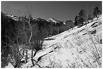 Glacier Basin in winter. Rocky Mountain National Park ( black and white)