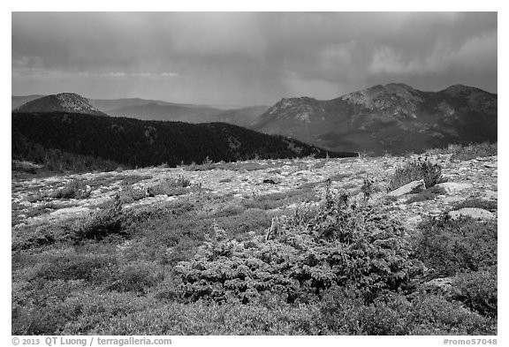 Bands of krummholz. Rocky Mountain National Park (black and white)