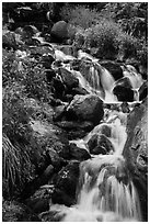 Cascading stream. Rocky Mountain National Park ( black and white)