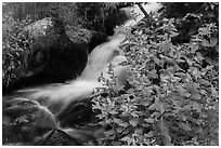 Wildflowers and cascading stream. Rocky Mountain National Park, Colorado, USA. (black and white)