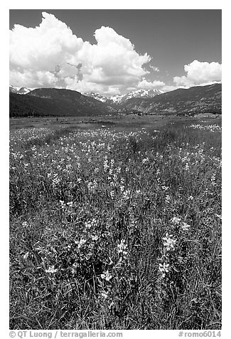 Meadow with wildflower carpet near Horseshoe Park. Rocky Mountain National Park (black and white)