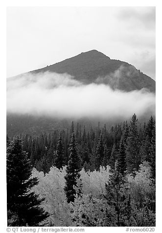 Trees, Fog, and Peak, Glacier Basin. Rocky Mountain National Park (black and white)